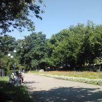 Nagyszőllős, park, Виноградов