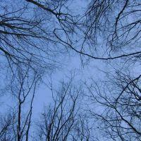 Ліс. Wood