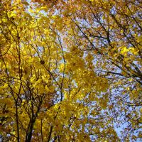 Осінній Парк 3. Autumn Park 3., Иршава