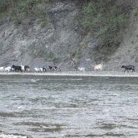 Кози..., Межгорье