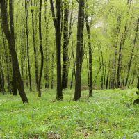 Erdő a huszti várrom mellett, Хуст