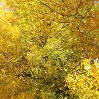 Очень жёлтое дерево, Акимовка