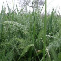 уже трава, Акимовка
