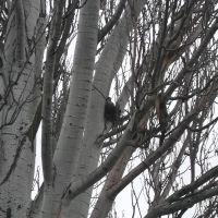 голубка в гнезде, Акимовка