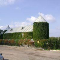 Зеленый дом, Васильевка