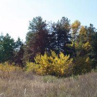 Каменский лесовой массив, Каменка-Днепровская
