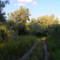 Дорога вдоль берега Белозёрского лимана, Каменка-Днепровская