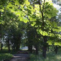 Парк, Куйбышево