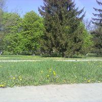 Алея возле парка, Куйбышево