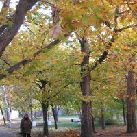 Парк у Покровской площади, Орехов