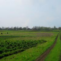 Сельские пейзажи, Орехов