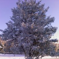 Зима 2009, Приазовское