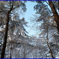Ліс зимою., Букачевцы
