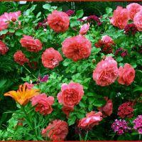 flower, Букачевцы