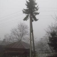 смерека на стовпі .., Бытков