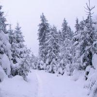 snow snow Сніг...сніг), Ворохта