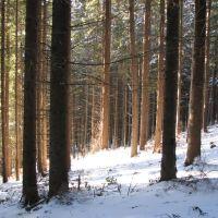 Сонячний ліс (Sunny forest), Ворохта