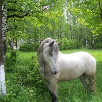 White horse, Надворна