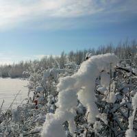 Зимова казка, Рогатин