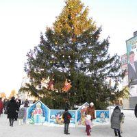 центральная елка, Белая Церковь