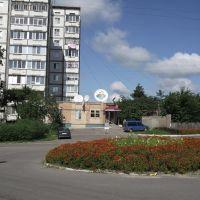 КРОКУС., Белая Церковь