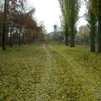 Золотая осень, Березань