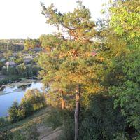 Вид з гори монастиря. Ялинка! :), Богуслав