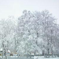 29.12.2009, Борисполь