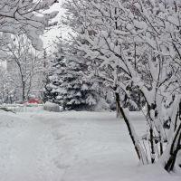 Борисполь. Стоматологическая клиника, Борисполь
