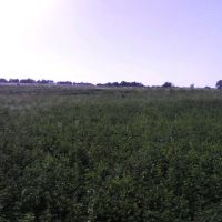 поле у селищі Борова, Боровая