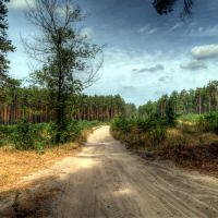 Road_Motovilovka_Plesetske, Боровая