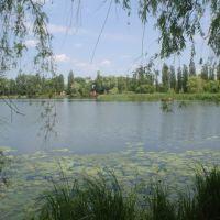 Озеро в Василькове, Васильков
