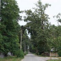 Ворзель, август 2009, Ворзель