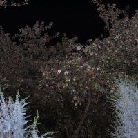 Ночной сад, Гребенки