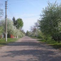 вулиця Шевченка, Згуровка