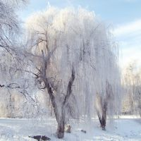 Зима..., Згуровка