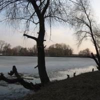 trees over the lake, Згуровка
