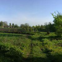 kitchen gardens, Згуровка
