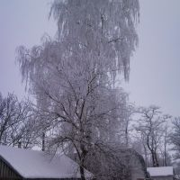 "Proletarskaya str. ""winter birch"", Иванков"