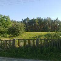 Wood, Иванков
