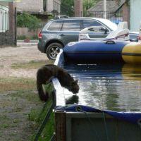 Кошачий водопой, Ирпень