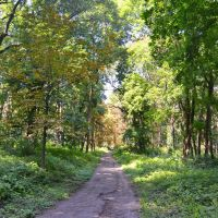 Старий парк у Кагарлику / Old Park in Kagarlyk, Кагарлык