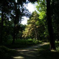 Тенистая аллея, Кагарлык