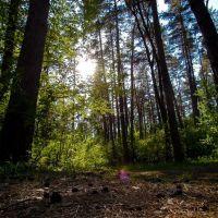 Хвойный лес, Калиновка