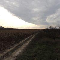 Дорога возле кукурузноего поля, Киевская