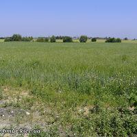 Fields near Vishnevyj, Киевская