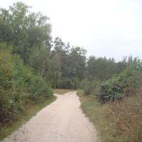 Зарастающая ул.Ворошилова., Кодра