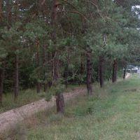 Фасадный участок с сосновым лесом,смена в любое целевое назначение, Козин