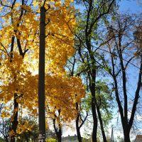 Парк возле ДК, Сквира