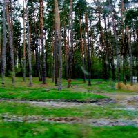 23.04.2012 17:28  Дорога Р04. Лес на выезде с города Тараща, Черкасской области., Тараща